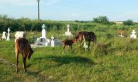 Cimitirul din cartierul Magurele.