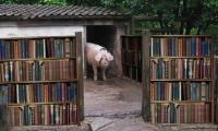 Stop manipulării! 7 imagini care arată că în Teleorman cărțile sunt extrem de populare .