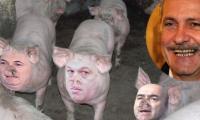 Liviu Dragnea, avantajat de pesta porcina.
