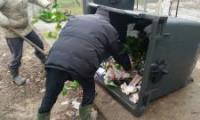 Muncitorii de la ajutorul social muta gunoiul din pubele cu mainile goale.