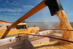 Prețul cerealelor pentru săptămâna 12-18 octombrie