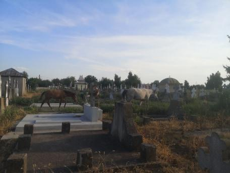 Cimitir Magurele