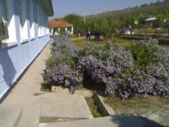Scoala Beciu,flori si albine