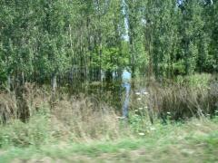 Pădurea de la Sâi (iulie 2010)
