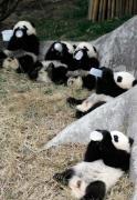 Maternitatea gradinii zoologice