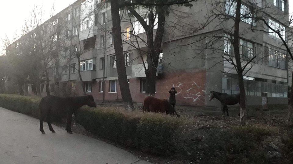 doamna caut barbat din câmpulung moldovenesc Intalnire feti? a intalnire